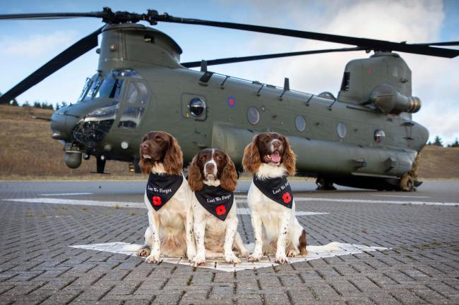 HELP: Max, Paddy and Harry inspired their followers to donate               Picture: SAC Charlotte Hopkins RAF